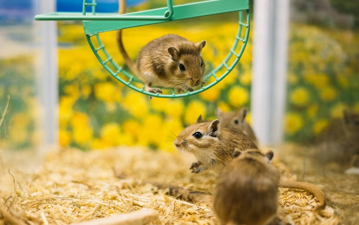 Gerbil Toys and Wheels